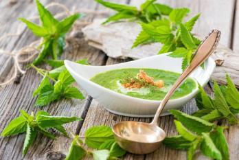 Lortie vertus antianemiques depuratives entre autres bonne soupe quiche 0 729 487
