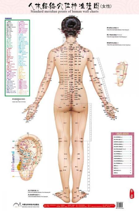 Points m ridiens standard de la carte murale humaine acupuncture f minine point de massage carte